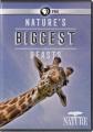 Nature's biggest beasts [videorecording]