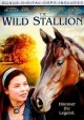 The wild stallion [videorecording (DVD)]